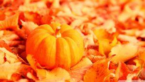 small orange pumpkin on orange leaves