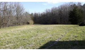 Cover photo for 20-Acre Hay Field for Lease and Other Creative Ideas Welcome in NW Forsyth County