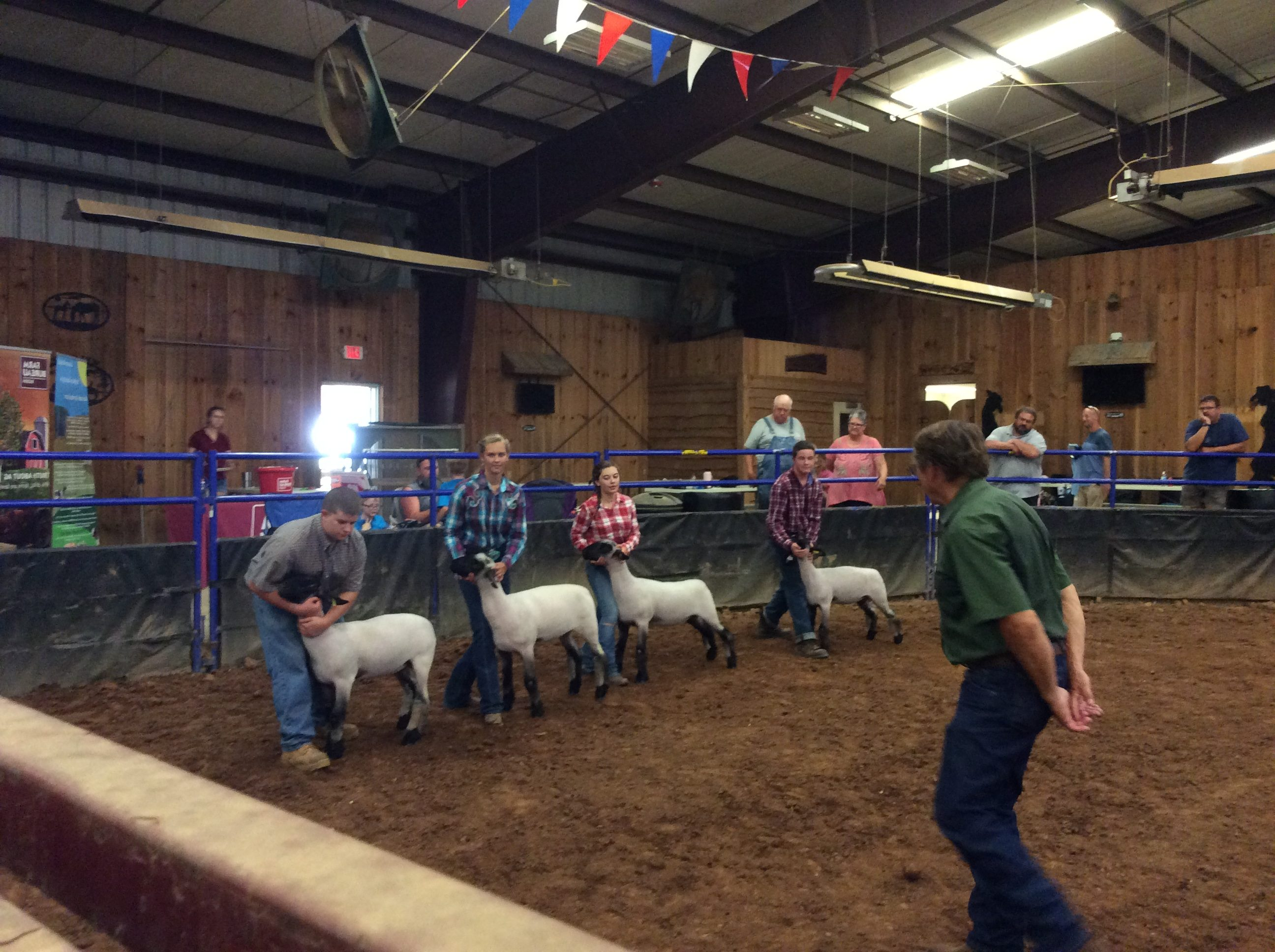 An indoor ring with four youth participants showing 4 sheep.