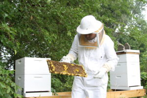 A man in a beekeeping suit holding a slat from the hive covered in honey and bees