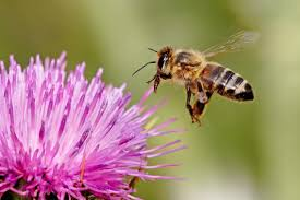Cover photo for Learn About Honey Bees