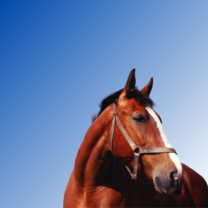 A blue to white gradient background with a brown horse with a white stripe down it's face looking to the right side of the image