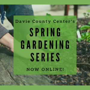 A photo of hands in a raised garden bed putting a plant in soil. On top of this photo is a green semi transparent square with the words Davie County Center's Spring Gardening Series Now Online!