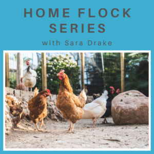 A photo of chickens in various shades of white, brown and black in a wire fenced area. On a blue background that says Home Flock Series with Sara Drake