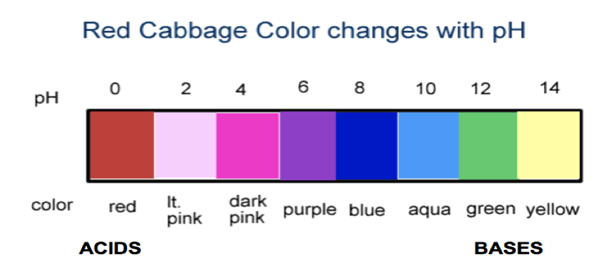 A color photo of a pH scale