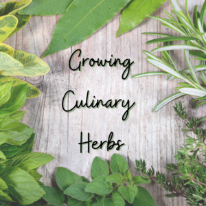 Cover photo for Interested in Learning to Grow Culinary Herbs?